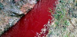 Post de Un río de Corea se tiñe de rojo por la sangre de 47.000 cerdos sacrificados