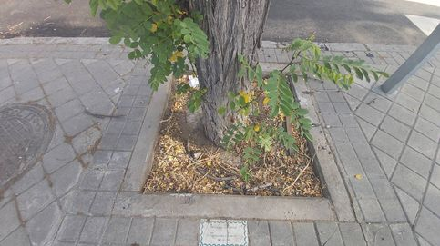 Buscando el árbol con mi nombre que el Ayuntamiento de Madrid plantó hace 30 años