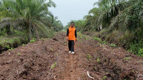 Un pueblo contra los incendios provocados por el aceite de palma