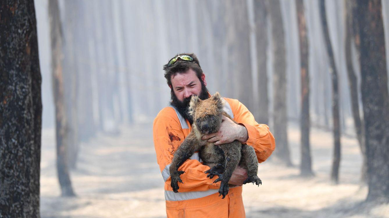 Incendios en Australia: 327 especies, en peligro de extinción