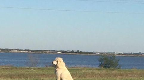 La enternecedora imagen de un perro que permanece fiel a su amigo muerto