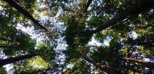 Post de Cuidar el planeta está en tu mano: gestos diarios para proteger el medioambiente