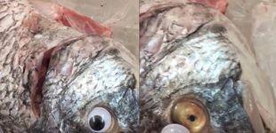 Post de Una pescadería pega ojos de plástico a los peces para que parezcan frescos