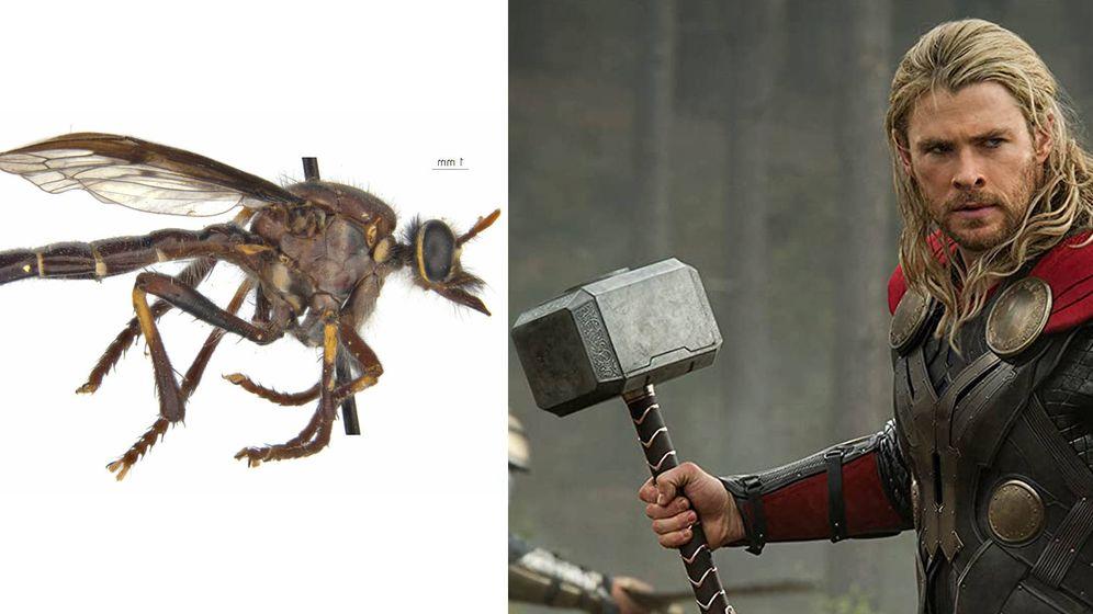 Foto: Thor y su mosca correspondiente. Foto: Twitter