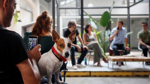 Un perrete durante la presentación de la candidatura de Més Barcelona