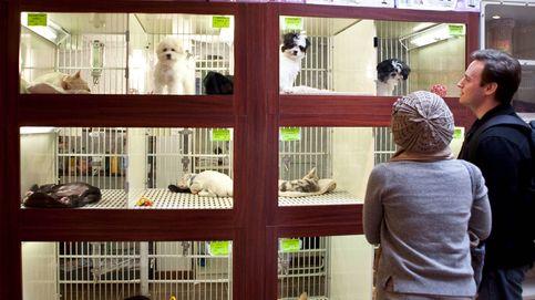 Madrid exige cuidadores nocturnos en cada tienda de mascotas: Es una aberración