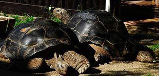 Post de Dos tortugas protagonizan la mayor historia de amor de todos los tiempos