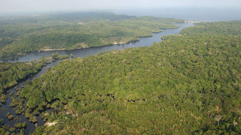 Fotografía de archivo de 2003 de la floresta amazónica brasileña. (EFE)