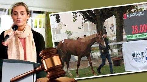Empresarios, políticos y nobles, los protagonistas de subastas de caballos