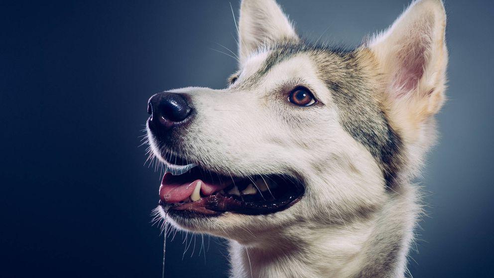 Los secretos de la mente canina: un nuevo estudio lo desvela todo