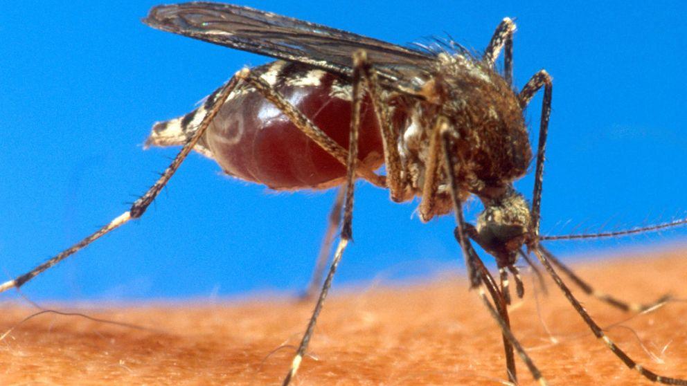 La causa real de que los mosquitos piquen a unas personas y no a otras