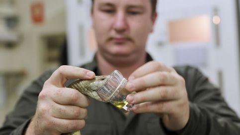Récord de veneno extraído de una serpiente: podría matar a 100 personas
