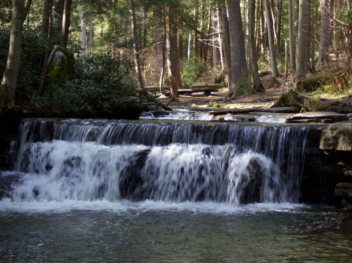 Foto: Los sonidos del bosque junto a los cauces de agua son únicos. (Unsplash)