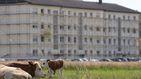 Alemania confina el distrito del rebrote en la planta cárnica tras más de 1.500 positivos