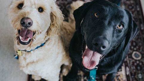 Multan a una pareja por alimentar a sus perros con una dieta vegana