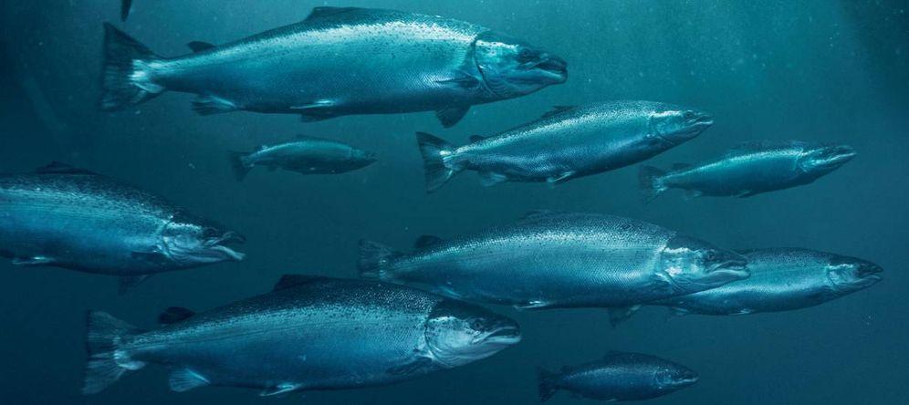 Foto: El consumo de pescado se ha reducido en 1,7 kilos en los últimos cuatro años. Fuente: NORGE