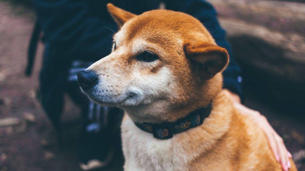 Foto: Ten cuidado con  lo que dices delante de tu perro. Imagen: Pixabay)