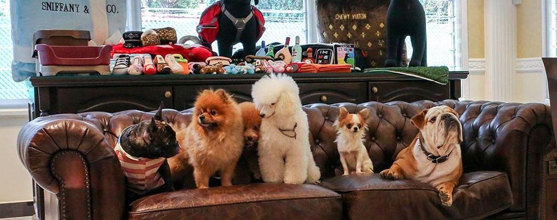 Foto: Perros VIP: así son los servicios de superlujo para mascotas