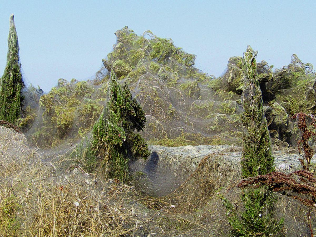 Foto: Las enormes telarañas han cubierto árboles y todo tipo de vegetación (EFE/Stavros Fanfanis)