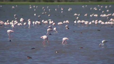 La marisma sevillana de Puebla del Río se tiñe de rosa