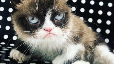 Adiós al felino más famoso de internet: muere Grumpy Cat