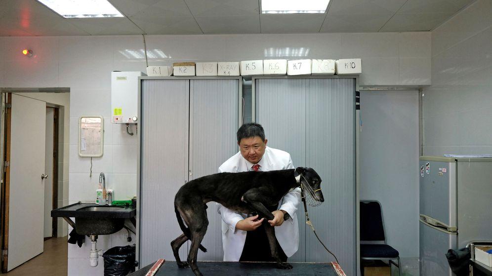 Foto: No poner las vacunas a las mascotas aumenta las posibilidades de sufrir enfermedades (Reuters/Bobby Yip)