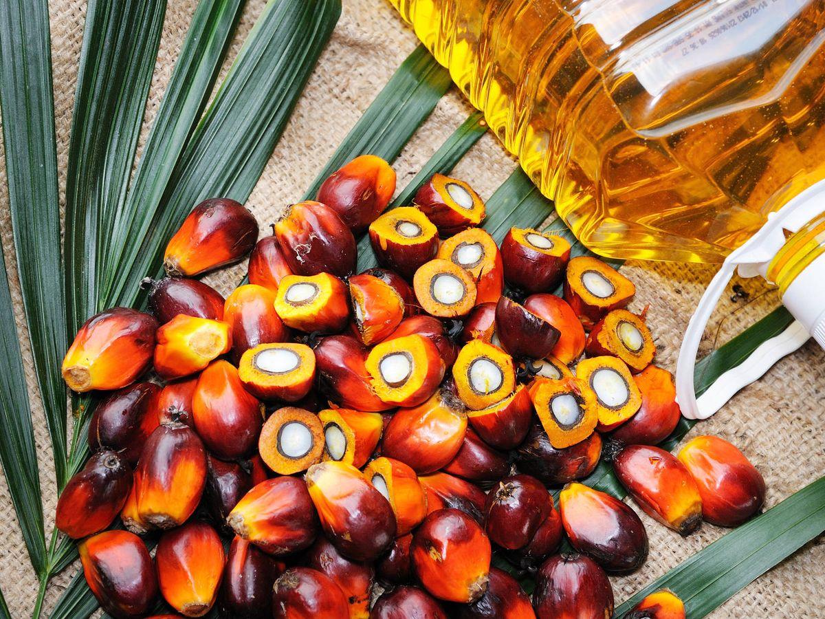 Foto: Los frutos de donde se extrae el aceite. (iStock)