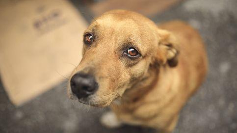 Decenas de perros son sacrificados en una localidad de Australia por miedo al covid