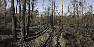 Foto: El perímetro del fuego de las Fragas Do Eume está controlado