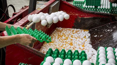 Tendrías que comerte 10.000 huevos con fipronil para sufrir problemas de salud