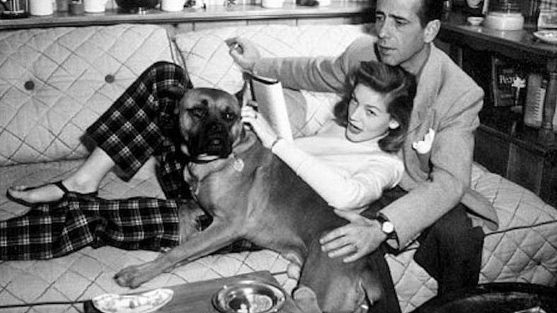 Por qué la pérdida de un perro es a veces más difícil que la de un familiar o un amigo