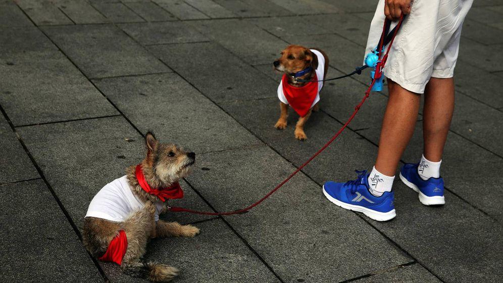 Foto: Dos perretes vestidos para sanfermines. (Reuters)