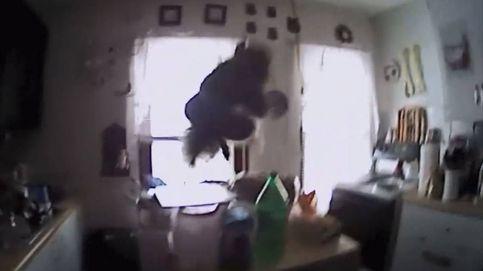 La ardilla voladora que robaba galletas