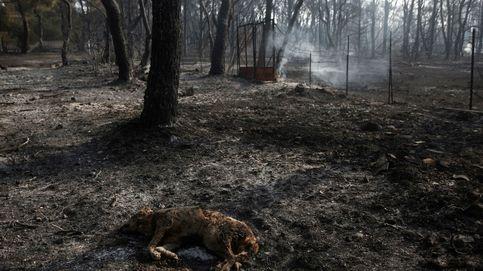 Incendio en Varybobi, al noreste de Atenas