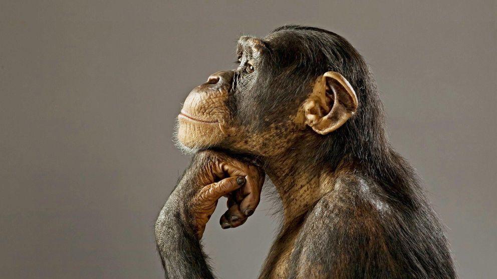 Monas ebrias y humanos híbridos: el experimento más loco de la biología