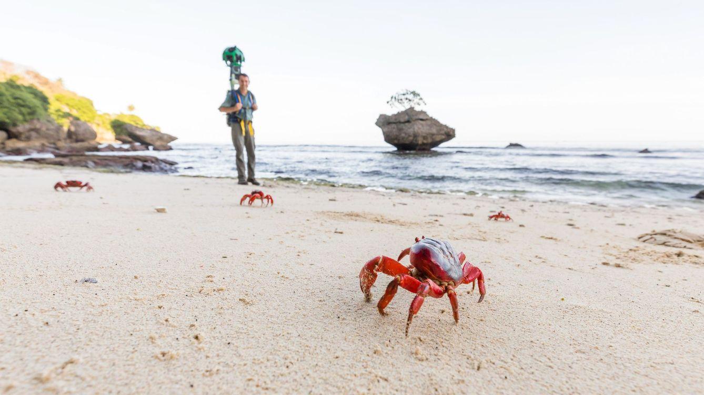 Foto: Fotografía cedida por Google Australia que muestra un Google Street View Trekker que camina en la Isla de Navidad (Australia). (EFE)