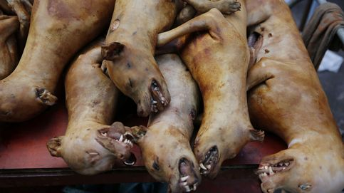 Así es el festival de carne de perro de China: una costumbre que no se prohíbe