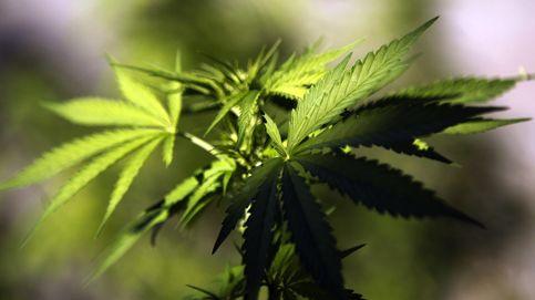 Uruguay y la legalización de la marihuana