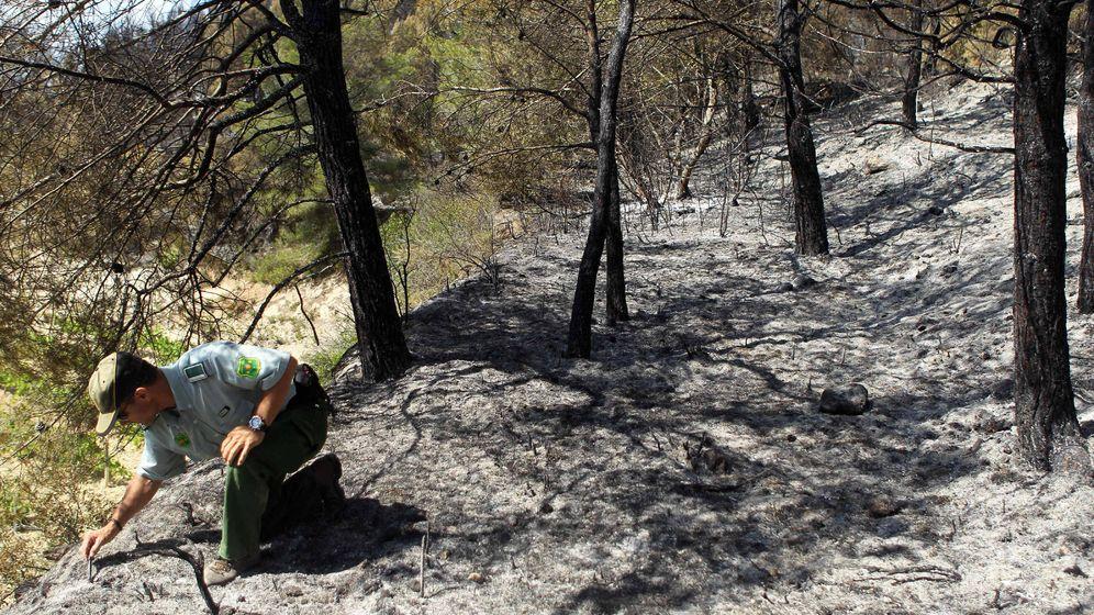 Foto: Un agente forestal toma muestras para investigar las causas de un incendio. (EFE)
