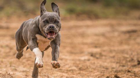 Muere por las heridas que le ocasionó el perro de sus parientes