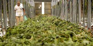 Bruselas eleva a 210 millones su propuesta para cubrir el 50% de las pérdidas de los agricultores