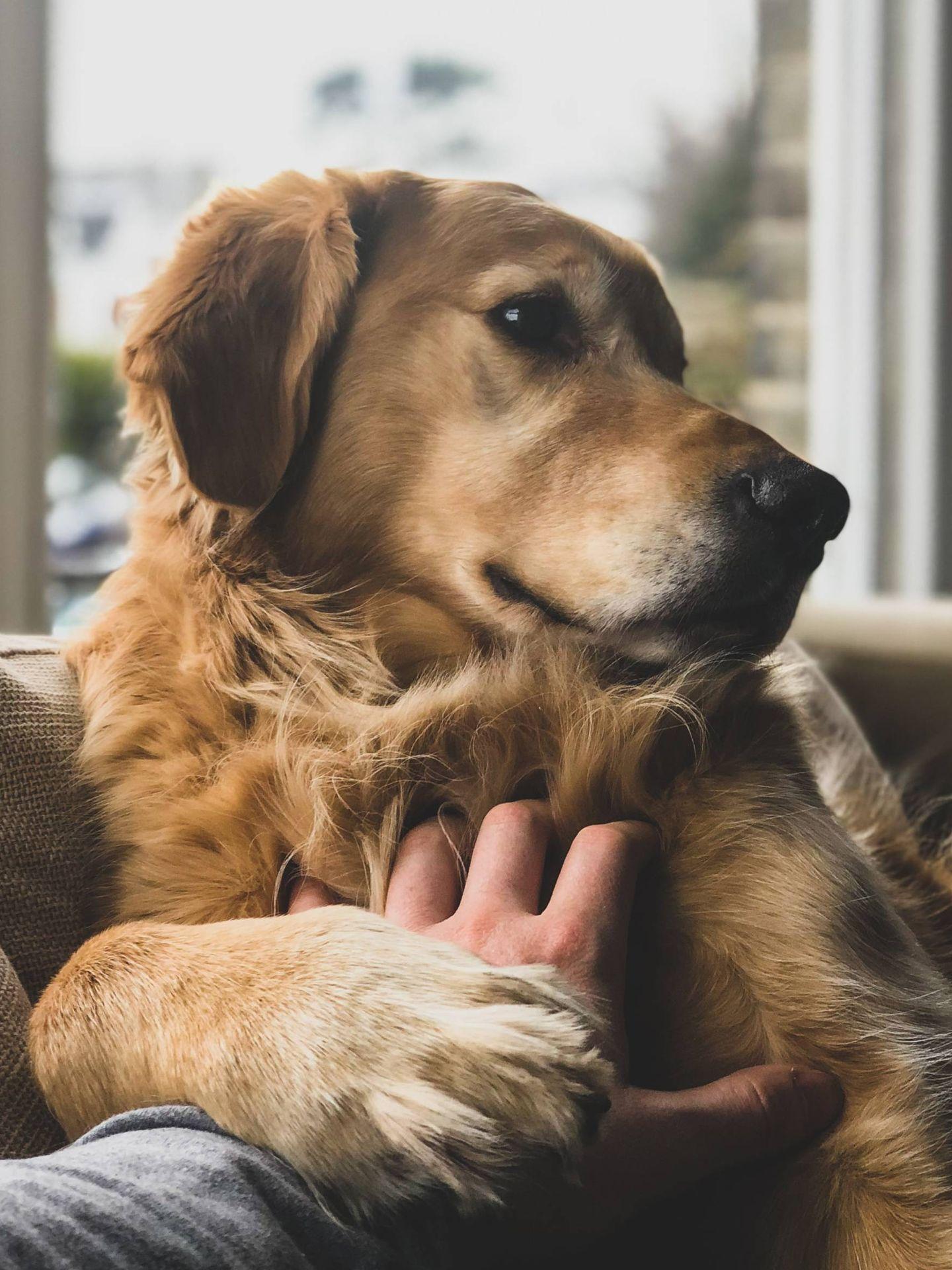 La dieta BARF quiere lo mejor para nuestro perro. (Jack Brind para Unsplash)