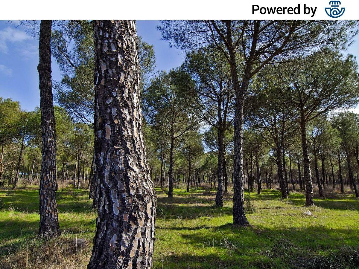 Foto:  Bosque mediterráneo en Doñana. (Jorge Sierra, WWF)