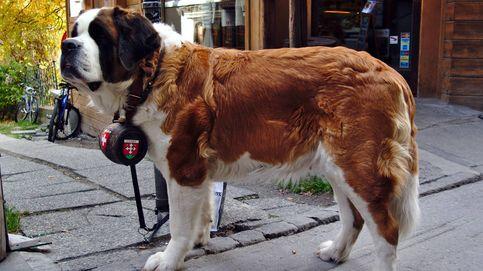 Los perros quieren rescatarnos, el problema es que no saben cómo hacerlo