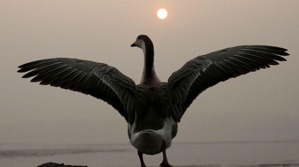 Foto: Un cisne abre sus alas al sol. (EFE)