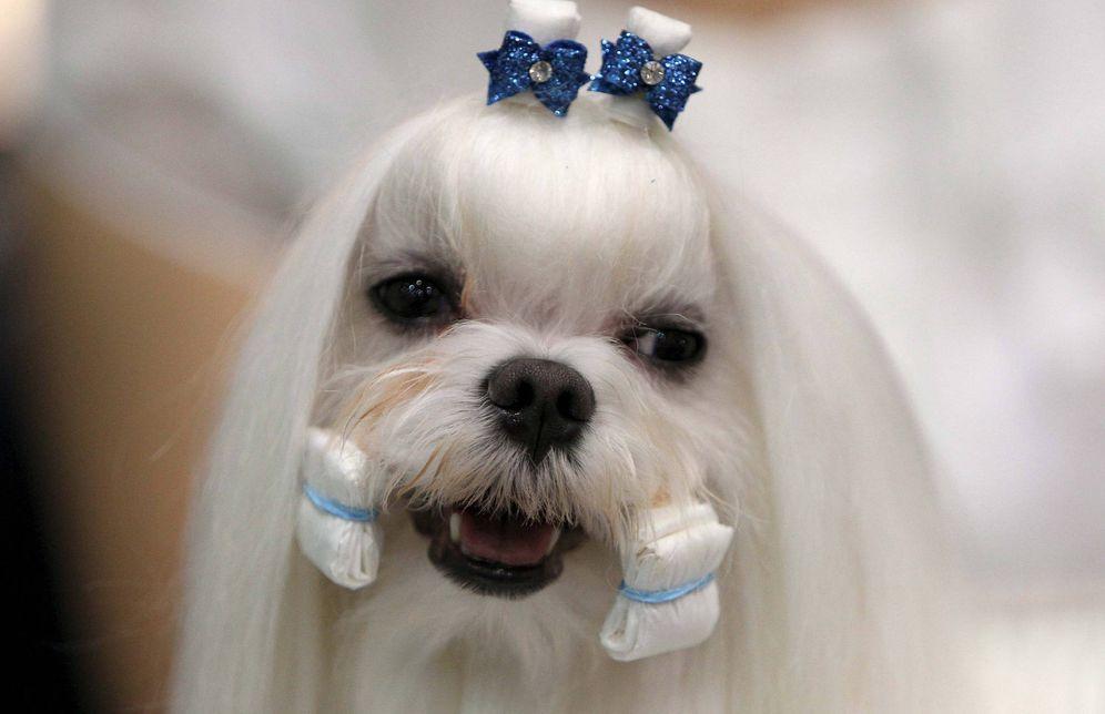 Foto: Proliferan las peluquerías para perros. (EFE)