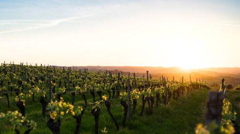 Así influyen el clima y el suelo en el carácter de un vino