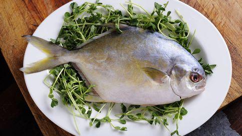 Palometa, un pescado con más proteínas que otras especies