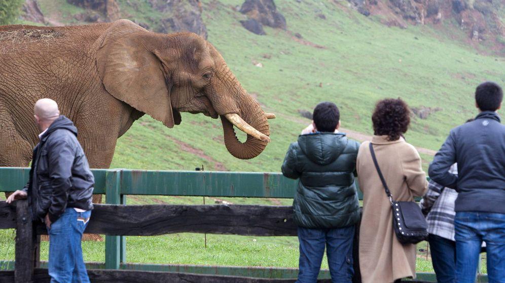 Foto: Un grupo de visitantes observa un elefante africano en el Parque de la Naturaleza de Cabárceno, Cantabria. (EFE)