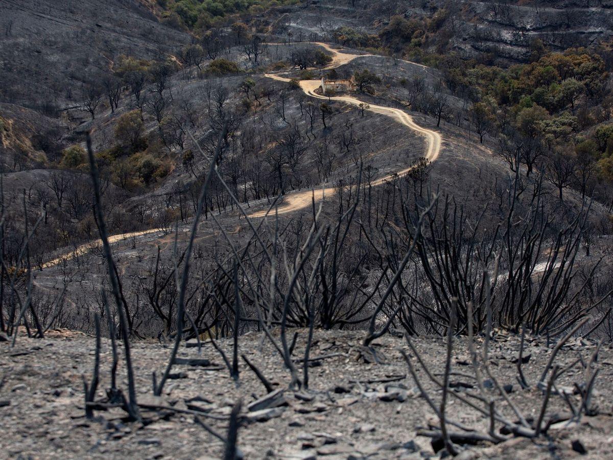 Foto: Vista de una zona arrasada por uno de los focos del incendio de Sierra Bermeja. (EFE)